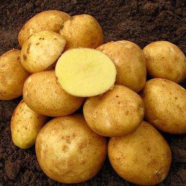 Kartupeļi (Vineta)