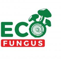 ECO FUNGUS
