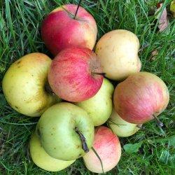 Rudens ābolu mix
